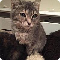 Adopt A Pet :: Annika - East Hanover, NJ