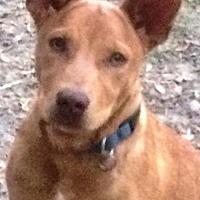 Adopt A Pet :: Carmela - Kilgore, TX