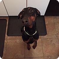 Adopt A Pet :: Roxy - Sinking Spring, PA