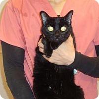 Adopt A Pet :: Jezebel - Wildomar, CA