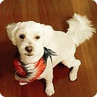 Adopt A Pet :: Zeus - Stow, ME