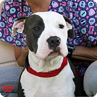 Adopt A Pet :: Riley - Santa Maria, CA