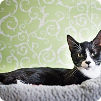 Adopt A Pet :: Sylvia - Red Wing, MN