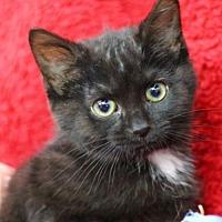 Adopt A Pet :: Carrie K - Raleigh, NC
