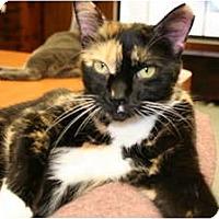 Adopt A Pet :: Sunny - Naples, FL