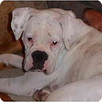 Adopt A Pet :: Pillsbury - Albany, GA