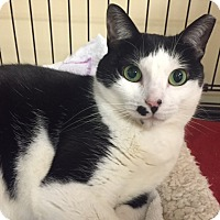 Adopt A Pet :: TWINKIE - levittown, NY