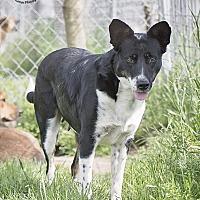 Adopt A Pet :: Kylie - Iola, TX