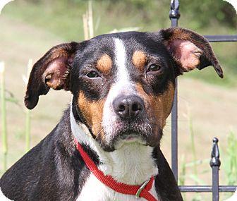 Hound (Unknown Type) Mix Dog for adoption in Marietta, Ohio - K.K. (Spayed)