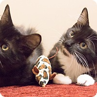 Adopt A Pet :: Jem and Scout - Chicago, IL