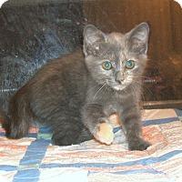Adopt A Pet :: PIXEL - Acworth, GA