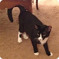 Adopt A Pet :: Freckle - Raritan, NJ