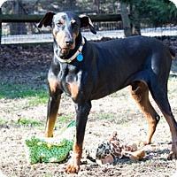 Adopt A Pet :: KAI - Greensboro, NC
