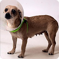 Adopt A Pet :: Minnie - Columbus, OH