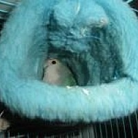 Adopt A Pet :: Sheldon - Neenah, WI