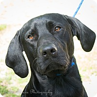 Adopt A Pet :: Bama - Daleville, AL