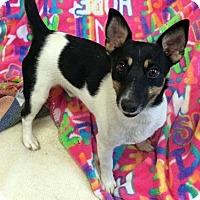 Adopt A Pet :: 'TIA' - Agoura Hills, CA