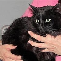 Adopt A Pet :: Arthur - Williamston, MI