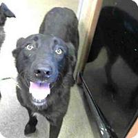 Adopt A Pet :: KODA - Sacramento, CA