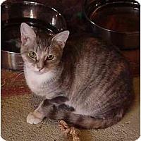 Adopt A Pet :: Nicole - Chesapeake, VA