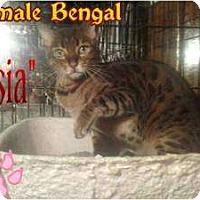 Adopt A Pet :: Asia - Lantana, FL