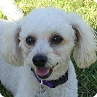 Adopt A Pet :: Linus - La Costa, CA