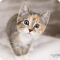 Adopt A Pet :: Colby - Eagan, MN