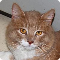 Adopt A Pet :: Wolfie - North Branford, CT