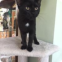 Adopt A Pet :: Serena - Sterling Hgts, MI