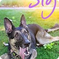 Adopt A Pet :: Sig - Scottsdale, AZ