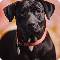 Adopt A Pet :: Cubbie - Portland, OR