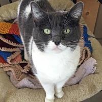Adopt A Pet :: Katie - Temecula, CA