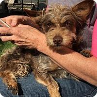 Adopt A Pet :: Sunny - Fresno, CA