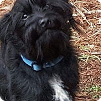 Adopt A Pet :: Boomer CG in MS - Providence, RI