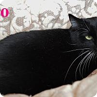Adopt A Pet :: Roo - Fryeburg, ME