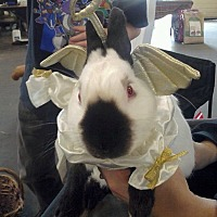 Adopt A Pet :: PJ - Seattle c/o Kingston 98346/ Washington State, WA