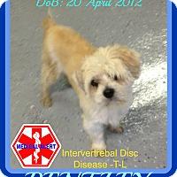 Adopt A Pet :: BENTLEY - Allentown, PA