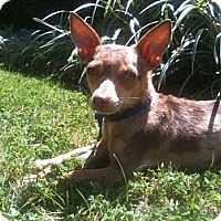 Adopt A Pet :: Jeremy - West Hills, CA