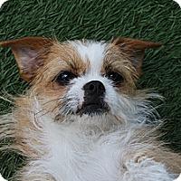 Adopt A Pet :: Ginger - Santa Ana, CA