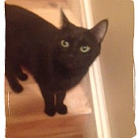 Adopt A Pet :: Mandu-Courtesy Post - Olmsted Falls, OH