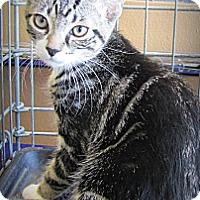 Adopt A Pet :: Drake - Seminole, FL