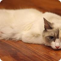 Adopt A Pet :: Libby - Sacramento, CA