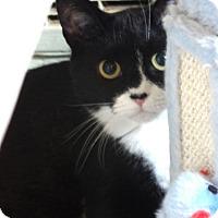 Adopt A Pet :: Birdie - Devon, PA