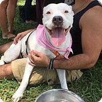 Adopt A Pet :: Pepa - Miami, FL