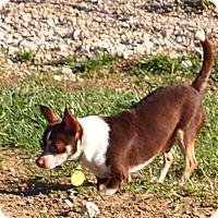 Adopt A Pet :: Cynch - Prole, IA
