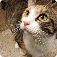 Adopt A Pet :: Dulce @ Roswell - McDonough, GA
