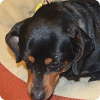 Adopt A Pet :: Amity - Prole, IA