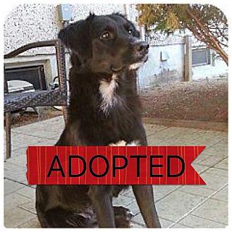 Border Collie/Labrador Retriever Mix Dog for adoption in Regina, Saskatchewan - Hailey