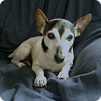 Adopt A Pet :: Sadie - Ruskin, FL