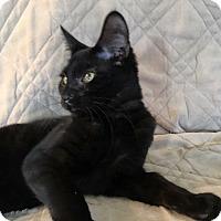 Adopt A Pet :: Havana - Mount Laurel, NJ